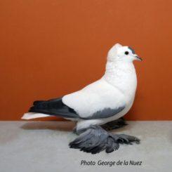 23 Saxon Stork, blue, WCH, V-97, Zwonitz 2016, Corinna Reimann