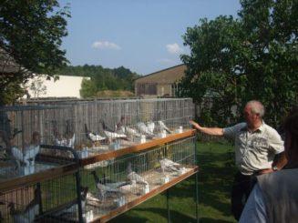 Zuchtwart und Sonderrichter Bernfried Arndt bei der Tierbesprechung