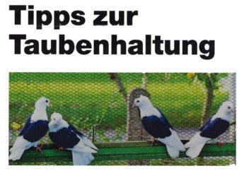 Tipps zur Taubenhaltung, dpa Artikel